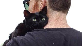 Download Black cat spends 6 months at shelter then he jumps on a random man's lap and won't move Video
