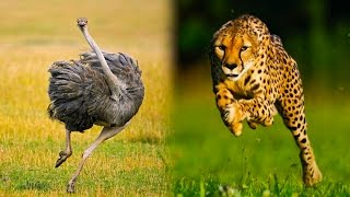 Download Top 10 Ridiculously Fast Animals Video