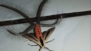 Download Clarification to this Insect Video