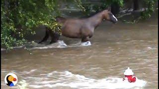 Download Incredible Hurricane Harvey Horse Rescue | The Dodo Video