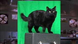 Download Making Purrassic Park! Video