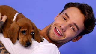 Download Liam Payne Plays With Puppies Video
