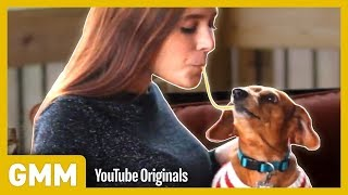 Download Lady and The Tramp Dog Trick I Teach Your Old Dog A New Trick Video