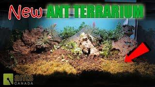 Download AMAZING NEW ANT TERRARIUM! Video