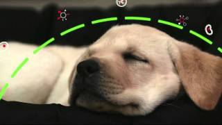 Download PURINA® PRO PLAN® Puppy with OPTISTART® Video