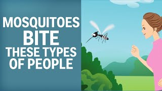Download Mosquitoes Like To Bite These Types Of People Video