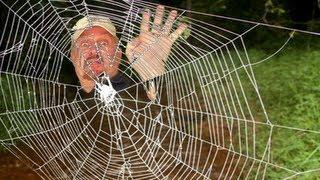 Download WORLD'S STRONGEST SPIDER WEB Video