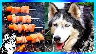 Download CAMPING SHISH KABOBS DIY DOG TREATS | Snow Dogs Snacks 53 | Dog Treats Video