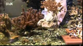 Download 354 Energiewende Video Klimawandel die Korallenriffe sterben durch zu viel CO2. Video