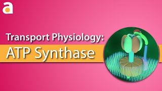 Download Transport Physiology: 3D ATP Synthase (ATPase) Video