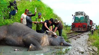 Download Reasons to trust Humanity! Helping an injured Elephant Video