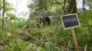 Download Parcours de vie Isabella Sallusti, agrotourisme en permaculture Video