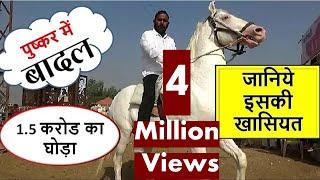 Download 1.5 करोड़ का बादल पुष्कर मेले में बरसा : Millions Price Of Indian Horse In Pushkar Mela Market 2018 Video