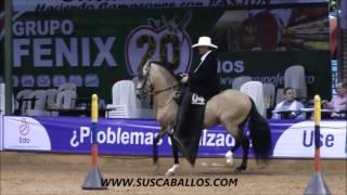 Download GRAN CAMPEONATO CABALLOS TROTE Y GALOPE COLOMBIANO COPA AMERICA 2015 Video