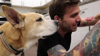 Download DOGS REACT TO BRUSHING TEETH! Video