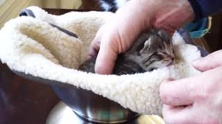 Download Kitten Close Up 2018-02-14 Video
