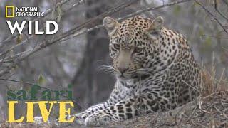 Download Safari Live - Day 205   Nat Geo Wild Video
