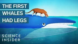 Download How Whales Became The Largest Animals Ever Video