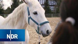 Download Tierschutz: Die Tierflüsterer   DIE REPORTAGE   NDR Doku Video