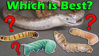 Download Which Feeder Worms are Best for your Reptile? Video