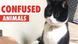 Download Confused Animals | Funny Pet Video Compilation Video