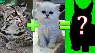 Download 15 UNBELIEVABLE CUTE CROSS BREED CATS Video