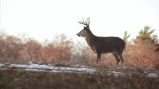 Download 2017 Whitetail Rut: Three Things You Need to Know Video