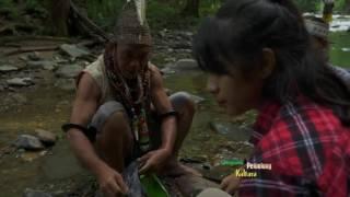 Download JEJAK PETUALANG - POHON RAKSASA KALIMANTAN DI MATA DUNIA (20/3/17) 3-2 Video