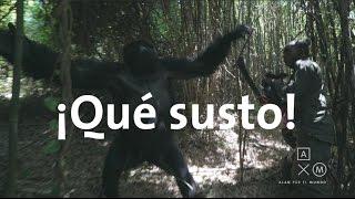 Download Los gorilas nos sacaron un susto! | Uganda y Ruanda #7 Video