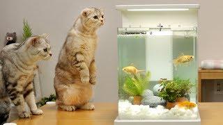 Download 고양이와 금붕어 어항 꾸미기 - 고양이들 반응 Video