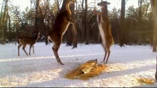 Download Deer Trail 2-3-17 Video