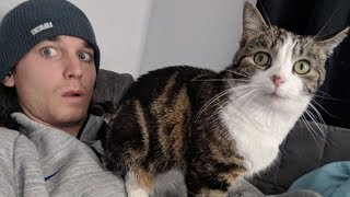 Download Man Befriends A Stray Cat, It Follows Him Home And Things Escalate Quickly Video