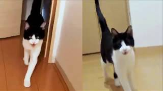 Download 6年経っても2秒でにゃんこ - Happy Cat Welcomeow 6 years later - Video