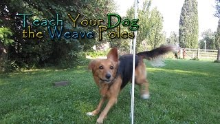 Download Teach Your Dog the Weave Poles! - In Four Steps! - Dog Agility Video