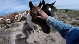 Download GoPro: Wild Mustangs - A Legacy in 4K Video