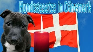 Download Hundegesetz in Dänemark tötet unschuldige Hunde! Video