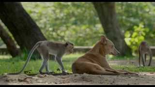 Download ″What Are You″ Clip - Disneynature's Monkey Kingdom Video