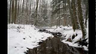 Download Winter-Forest Stream [Ambient] relaxing sounds Video