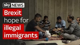 Download Brexit hope for illegal immigrants Video