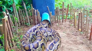 Download The First Creative Snake Trap That Works 100% by Smart Boy Video