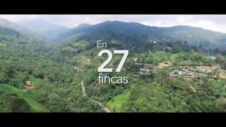 Download BIRDFAIR 2017 Cali - Colombia Video