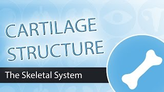 Download Cartilage Structure Video