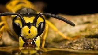 Download Классный фильм!!! Насекомые Документальный фильм про насекомых канала BBC Video
