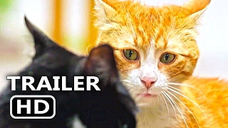 Download KEDI Official Trailer + Clip (2017) Cats Documentary Movie [HD] Video