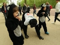 Download 'Gorilla Man' Finishes 6-Day UK Marathon Crawl Video