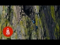 Download Chinese 'Spider' Climbers Use No Ropes or Tools to Scale Cliffs Video
