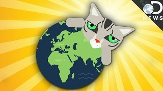 Download How Did Cats Spread Around The World? Video