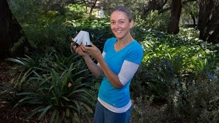 Download Study reveals plants can hear Video