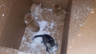 Download Four Kittens Left Outside In Cardboard Box During A Snowstorm Saved By Stranger Video