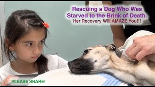 Download Rescuing a Dog Who Was Starved to the Brink of Death - Her Recovery Will AMAZE You! Please Share! Video